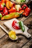 Bio- peperoni dal giardino fotografia stock libera da diritti