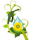 Bio- pianta del combustibile Fotografia Stock
