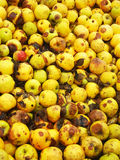 Bio pommes jaunes Photo libre de droits
