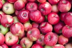 Bio pommes rouges fraîches Photos stock