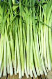 Bio- porro sano fresco sul mercato agricolo dell'agricoltore Immagine Stock Libera da Diritti