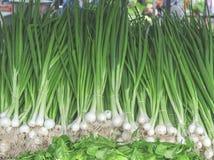 Bio- porro sano verde fresco sul mercato agricolo dell'agricoltore il giorno soleggiato Fotografia Stock