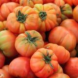 Bio- priorità bassa dei pomodori Immagine Stock Libera da Diritti