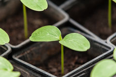 Bio- produzione alimentare Immagini Stock