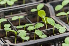 Bio- produzione alimentare Fotografia Stock Libera da Diritti
