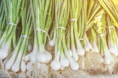 Bio puerro sano verde fresco en mercado agrícola del granjero el día soleado de la mañana Fotografía de archivo libre de regalías