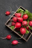 Bio radish bunch, agriculture. Delicious fresh food.  royalty free stock photo