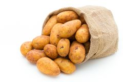 A bio russet potato isolated white background. A bio russet potato isolated white background stock images