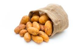 A bio russet potato isolated white background.  royalty free stock photo