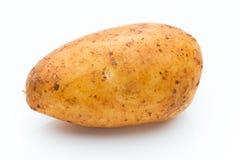 A bio russet potato isolated white background.  royalty free stock photos