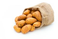 A bio russet potato isolated white background.  royalty free stock photography