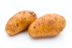 A bio russet potato isolated white background.  royalty free stock image