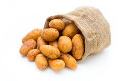 A bio russet potato isolated white background.  stock image