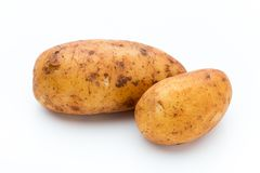 A bio russet potato isolated white background.  stock images