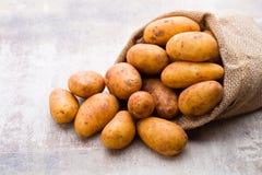 A bio russet potato wooden vintage background. A bio russet potato wooden vintage background stock photography
