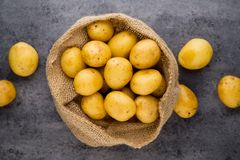 A bio russet potato wooden vintage background. A bio russet potato wooden vintage background royalty free stock photography