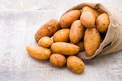 A bio russet potato wooden vintage background. A bio russet potato wooden vintage background stock image