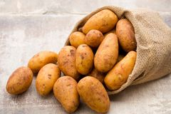 A bio russet potato wooden vintage background.  stock photo