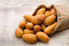 A bio russet potato wooden vintage background.  royalty free stock images