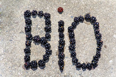 Bio sign made with blueberries Stock Photo
