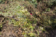 Bio--spreco e composta freschi nel giardino immagine stock