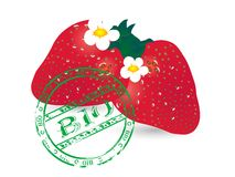 Bio strawberries Stock Image