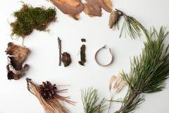 Bio- testo organico naturale dai deteails della foresta su fondo bianco, ecologico, iscrizione di ecologia, idea creativa di gior immagini stock libere da diritti