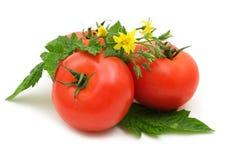 Bio tomates fraîches photographie stock libre de droits