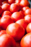 Bio tomatoes Stock Images