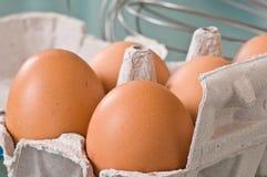 Bio- uova Immagine Stock Libera da Diritti
