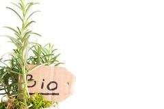 Bio usine de romarin Photographie stock libre de droits