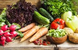 Bio Vegetables Assortment Freshly Picked Royalty Free Stock Photo