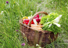 Bio Vegetables Basket Freshly Picked from the Garden Royalty Free Stock Photography