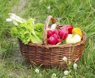 Bio Vegetables Basket Freshly Picked from the Garden Stock Photo