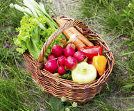 Bio Vegetables Basket Freshly Picked from the Garden Royalty Free Stock Photo