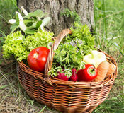 Bio Vegetables and Green Herbs Basket Freshly Picked from the Ga Stock Photography