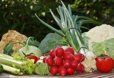 Bio-vegetais Foto de Stock Royalty Free