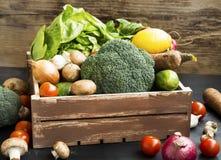 Bio- verdure con il ravanello, broccoli, insalata, funghi, broccoli, gatto fotografie stock libere da diritti