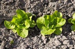 Bio- verdure crescenti fotografia stock