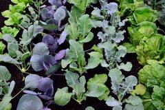 BIO verse Groente op tuin Stock Fotografie
