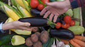 bio voedsel Tuinopbrengst en geoogste groente Verse landbouwbedrijfgroenten in houten doos stock videobeelden