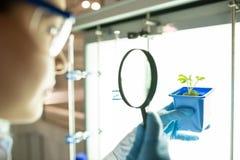 Bio-wetenschapper die zaailing onderzoekt stock foto
