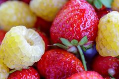 Bio yellow raspberries with red strawberries. close up.  Royalty Free Stock Photos