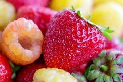 Bio yellow raspberries with red strawberries. close up.  Stock Photo