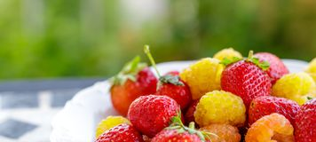Bio yellow raspberries with red strawberries on the table in the summer. close up.  Stock Photography