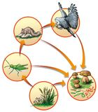 Food chain stock illustration