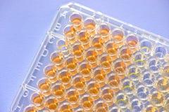 Biochemical assay Royalty Free Stock Photo