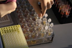 In the biochemical laboratory Stock Photo