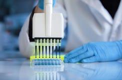 Biochemical tekniker som arbetar med vätskeprövkopior i mång- brunn för platta i laboratoriumet arkivbilder