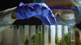 Biochemicus die agent in buizen met de productenonderzoek van de groene installatieskosmetiek toevoegen stock video